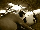 The Pittie and the Kittie by Linda Hardt