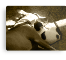 The Pittie and the Kittie Metal Print