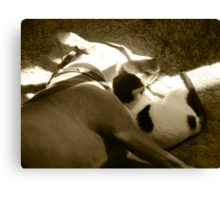 The Pittie and the Kittie Canvas Print