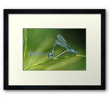 Damselflies Framed Print