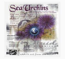 sea urchin by redboy