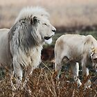 The Lion as King by laureenr