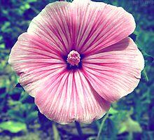 Wildflower by lemon-oh