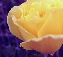 Yellow Rose by lemon-oh