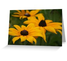 Glorisa Daisies Greeting Card