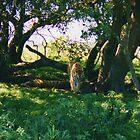 Tiger, Tiger... by Gillen