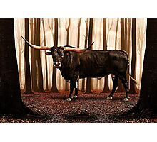 The Lonely Bull Fine Art Print Photographic Print