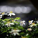 Keep your anemones closer by Matt West