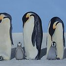 My march of the Penguins by Andy  Housham