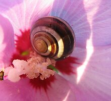 Snail in Rose Mallow by Detlef Becher