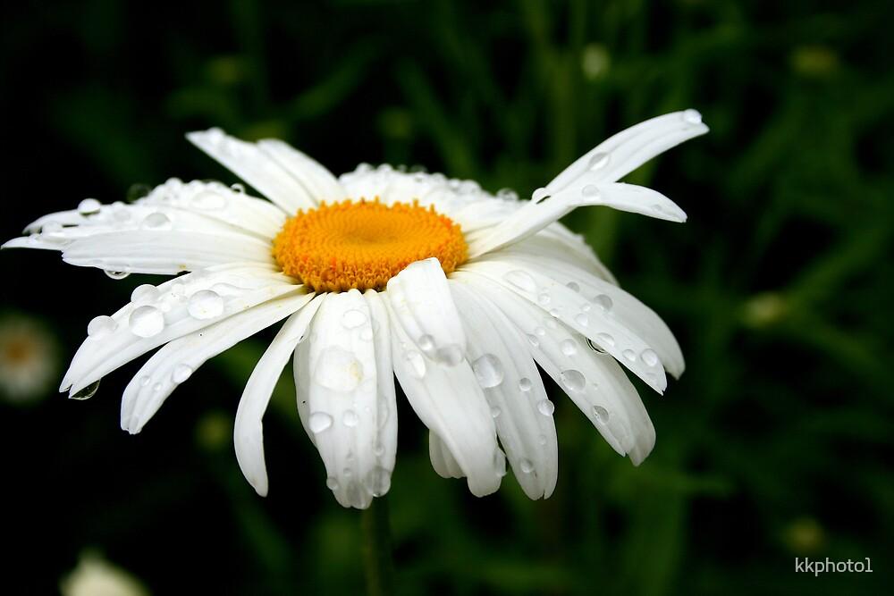 Rainy Day Daisy by kkphoto1