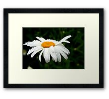 Rainy Day Daisy Framed Print