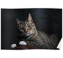 Bobo cat Poster