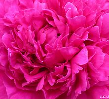 Up Tight Pink! by Bea Godbee