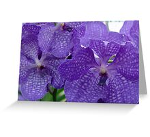 singapore orchids Greeting Card