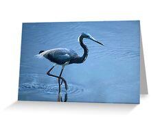 Tri-Color Heron Greeting Card