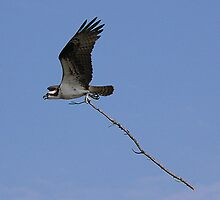 Osprey Nest Builder by WTBird