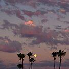 sunset, moon and palm trees by Jorge Vismara
