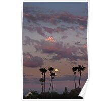 sunset, moon and palm trees Poster