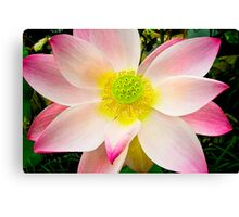 Water Lily VII    / Canvas Print