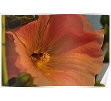 Hollyhock and the Bee Poster
