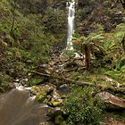 Erskine Falls • Victoria by William Bullimore