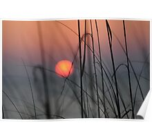 captiva sunset through the dunes Poster