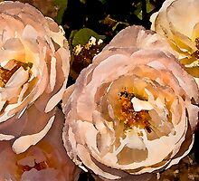 Rose Series II    /     by Shelley  Stockton Wynn