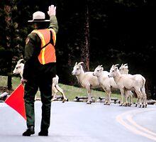 Dahl Sheep Crossing Guard by ShotByAWolf