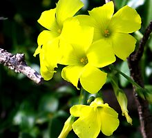 Yellow Lumos by Samuel Thompson