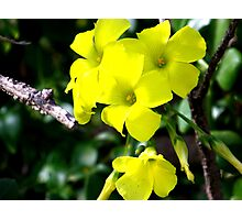 Yellow Lumos Photographic Print