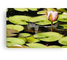 Water Lily Series I Canvas Print