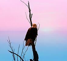 Bald Eagle Sky High by Vickie Emms