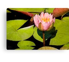Water Lily Series II Canvas Print