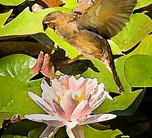 Water Lily Series III by Shelley  Stockton Wynn