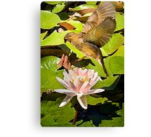 Water Lily Series III Canvas Print