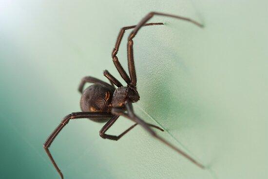 Black Widow by psnoonan