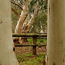 Old Cattle Yard,Davies High Plains.Victorian High Country by Joe Mortelliti