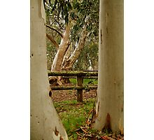 Old Cattle Yard,Davies High Plains.Victorian High Country Photographic Print