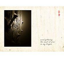 Scent Of Pine Photographic Print