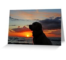 My Golden Retriever Ditte and the sunset Greeting Card