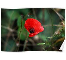 Poppy of Rememberance Poster