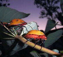 Harlequin Bugs by JuliaWright