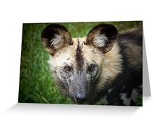 African Hunting Dog ....... Greeting Card