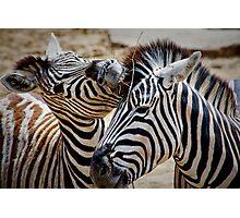 Damara Zebra ........ Photographic Print