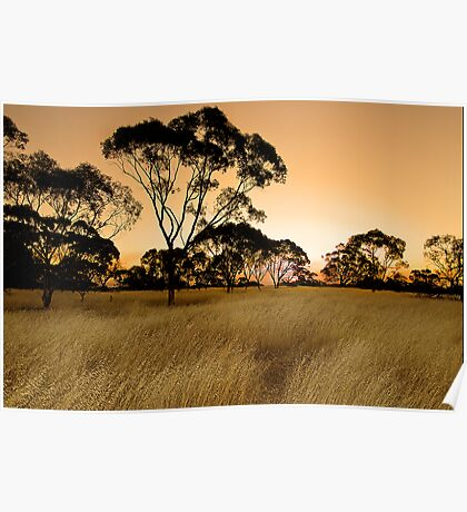 Sunset on the meadow Poster