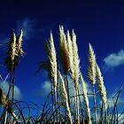 Sea Ferns by miametro