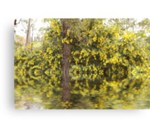 Wattle Reflections Canvas Print