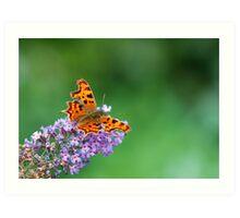 Comma - Butterfly Art Print