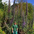 Among Giants............Echium-pininana-tower-of-jewels by lynn carter